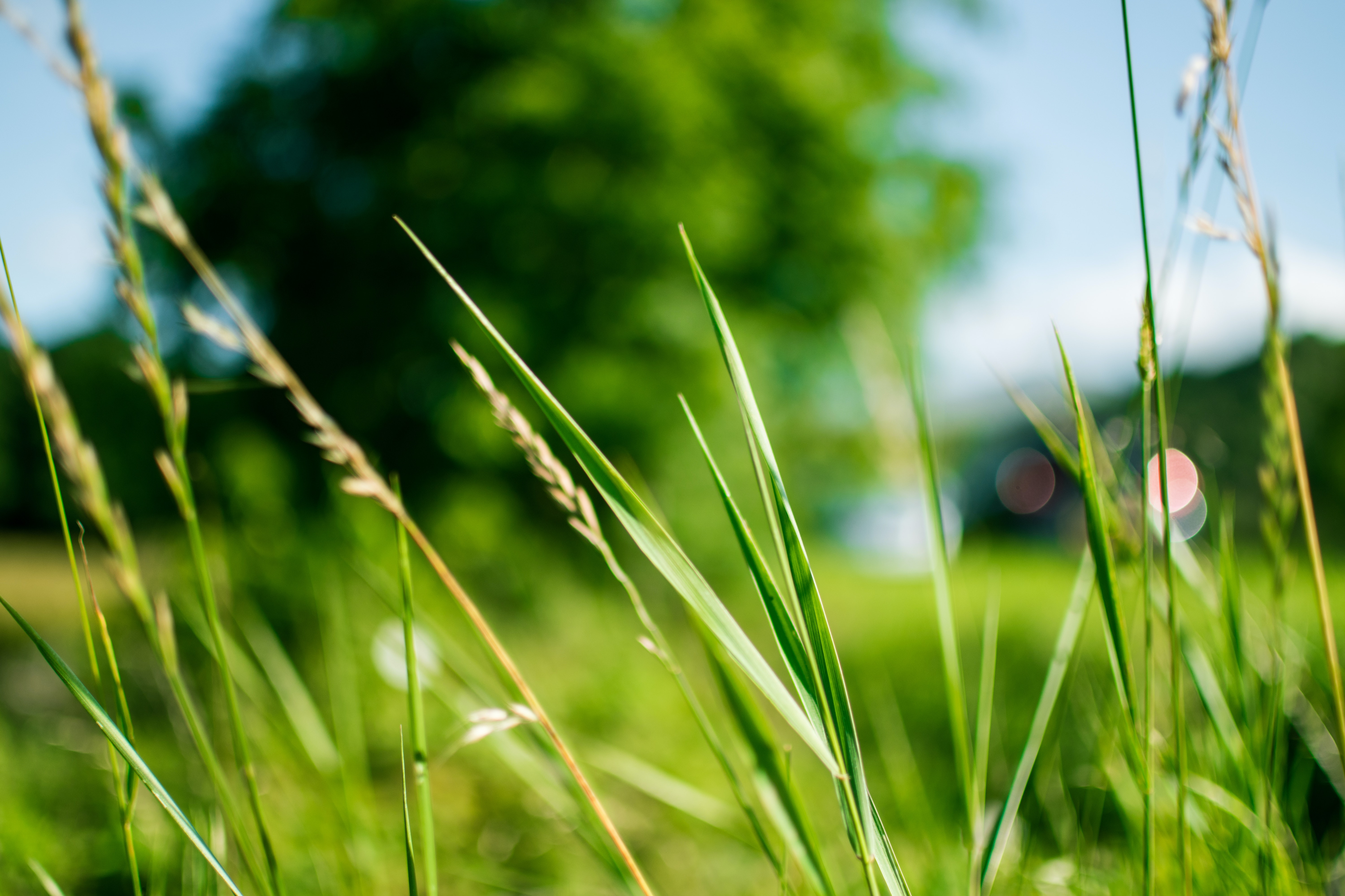 Group-Biodiversit - de quoi parle-t-on green-grass-during-daytime-in-focus-photography-167570.jpg
